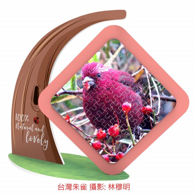 台灣朱雀-金翼白眉-磁旋雙面磁鐵拼圖