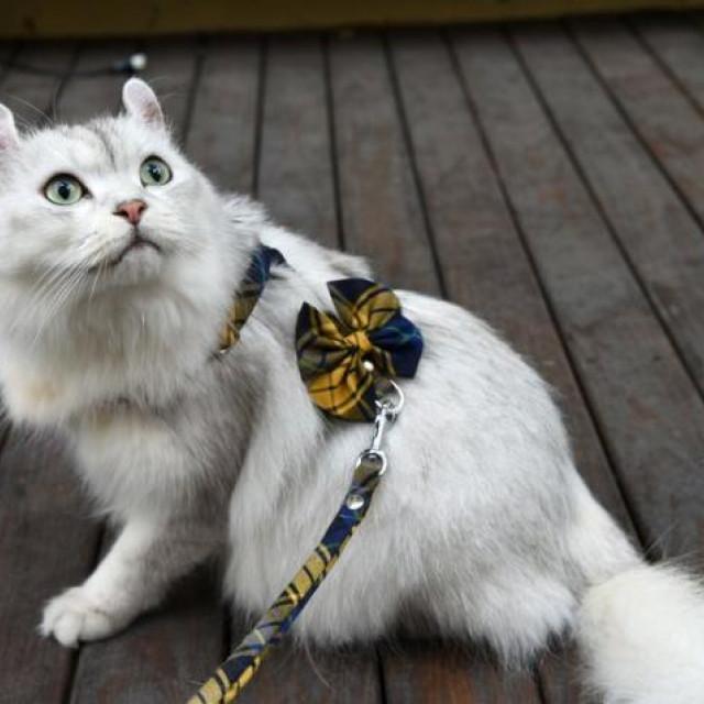 Zazazoo台灣製經典格紋寵物H型胸背-不含牽繩
