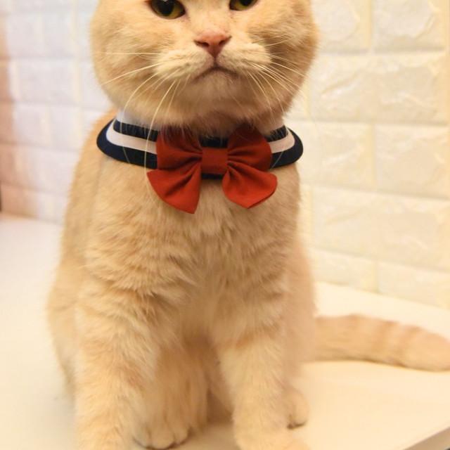 Zazazoo台灣製寵物水手領巾 附蝴蝶結+水手結美少女戰士