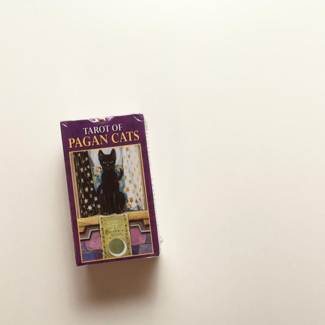 異教貓塔羅|喵~又來做主角|迷你卡|Tarot of Pagan Cats Mini