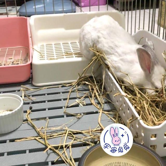 ☼宇宙兔兔☼牧草架兔子天竺鼠龍貓小動物固定式草架籠子網片適用草盆食物盆大草架