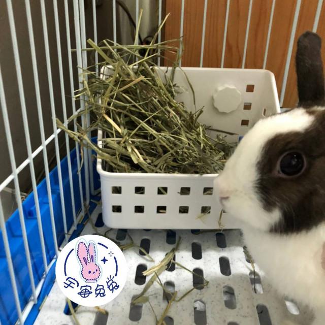 ☼宇宙兔兔☼牧草架兔子天竺鼠龍貓小動物固定式草架籠子網片適用草盆食物盆小草架